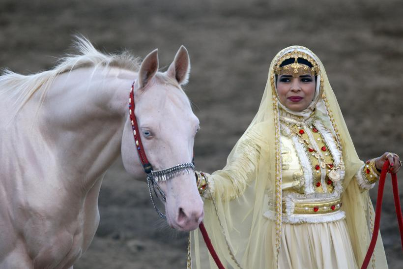 An Omani woman shows an albino horse