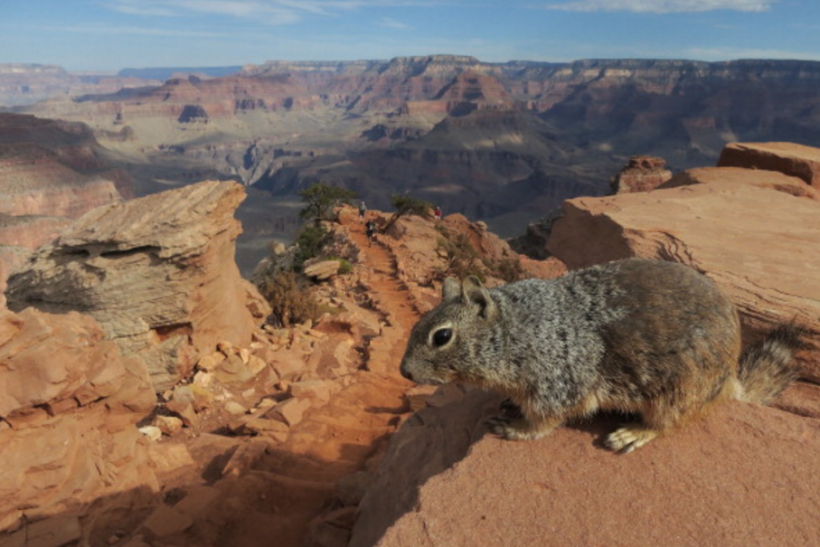 national park squirrel