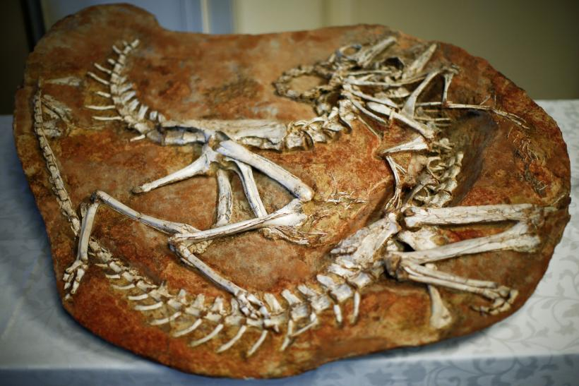 X-rays to reconstruct dinosaur