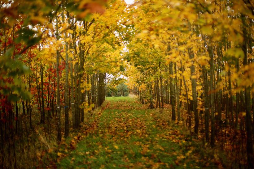 First Day Of Fall 2016 Quotes: 14 Sayings And Poems About ...