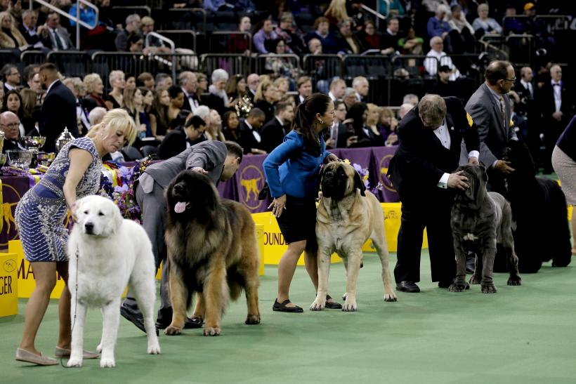 Kennel Club Of Philadelphia National Dog Show
