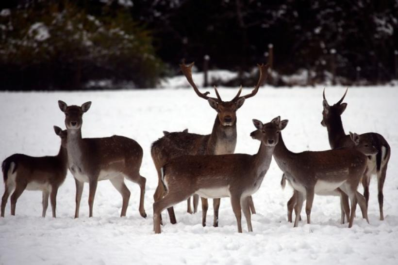 Two deer test positive for chronic wasting disease in Minnesota.