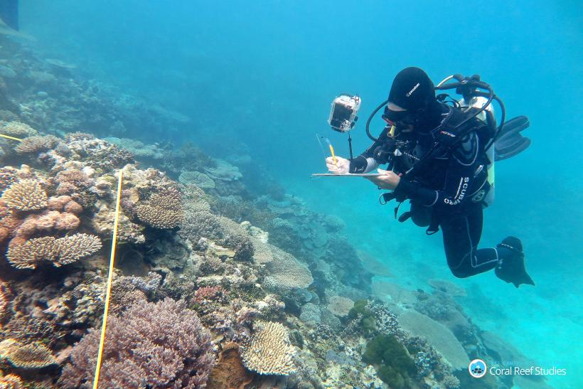Climate Change News Coral Bleaching Spreading On The Great