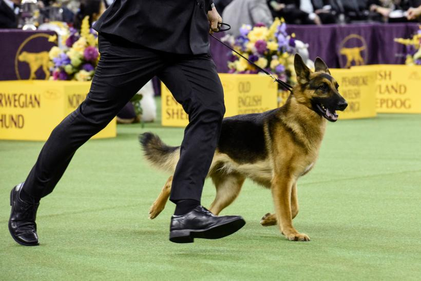 Westminster Dog Show 2017 Results: 'Best In Show' Winner