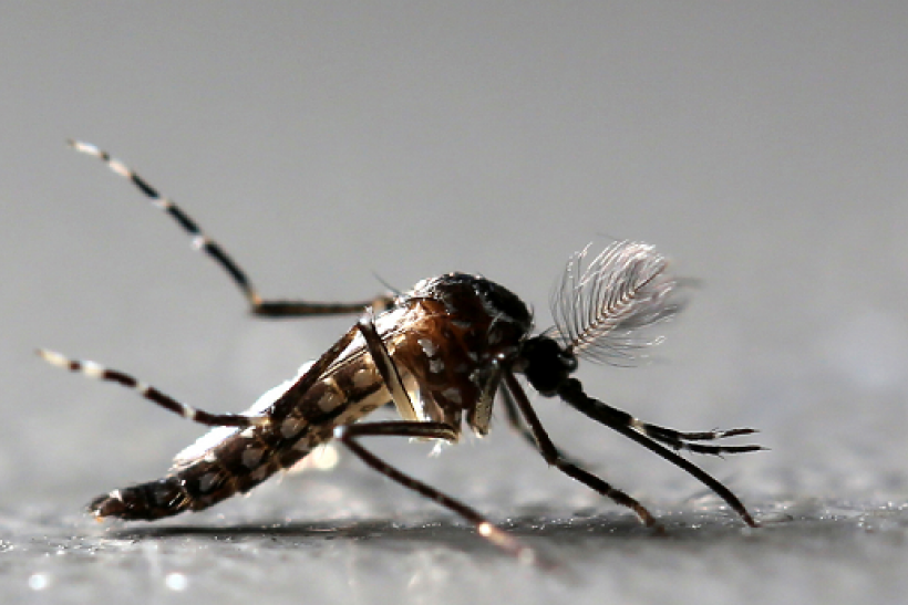 The yellow fever outbreak in Brazil has some worried the virus will be as big as zika.