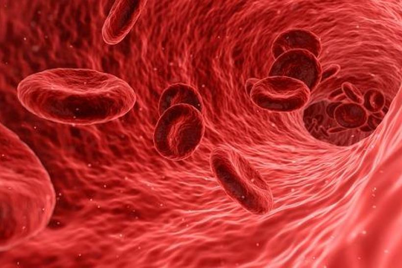 Scientists Use Stem Cells To Create Functional Artificial Blood