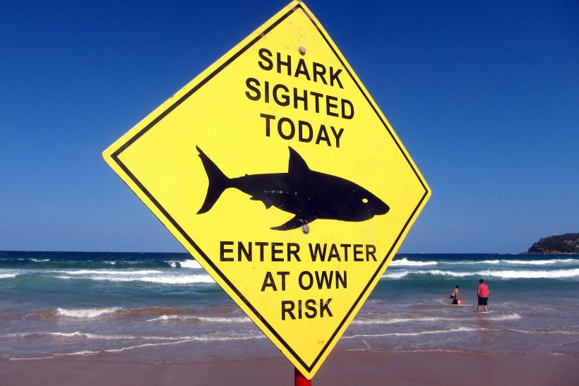 Swimmers Walk Into The Surf Next To A Sign Declaring Shark Sighting On Sydneys Manly Beach Australia Nov 24 2015 Photo REUTERS David Gray