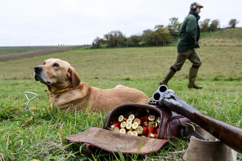 Pheasant Hunter Shot By His Dog In 'Freak Accident'