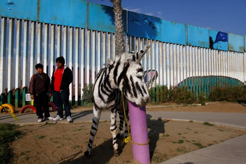 7e39e7a4f8ce5 Zoo Paints Donkey With Zebra Stripes To Fool Visitors