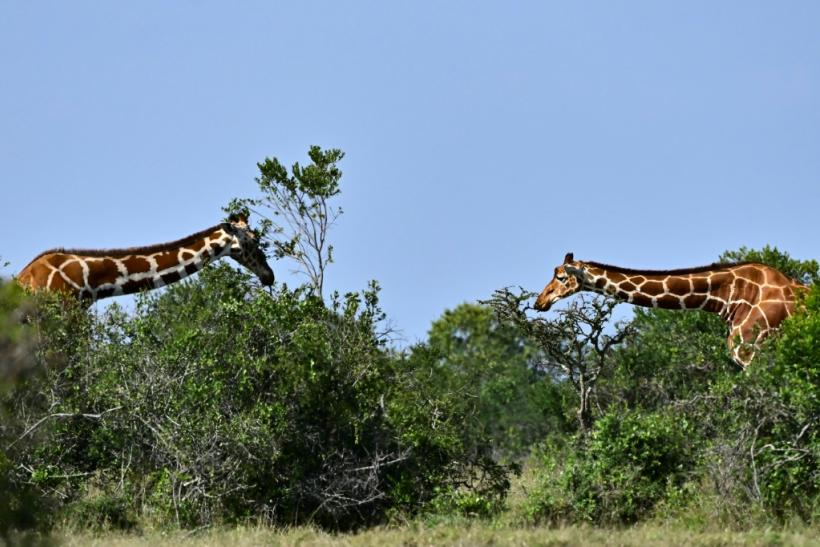CITES decided to regulate trade in giraffes, angering southern African nations who argue that trade does not contribute to the animal's decline