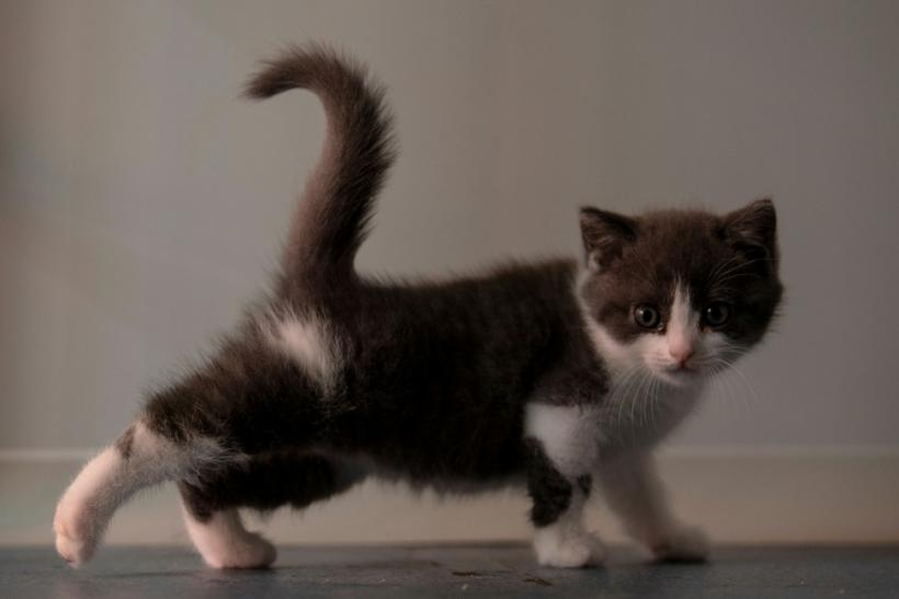 Garlic's owner said he hoped the character of the kitten clone would be like that of the original cat