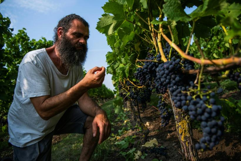 Swedish winemaker Murre Sofrakis, 51, is one of the country's biggest winemakers