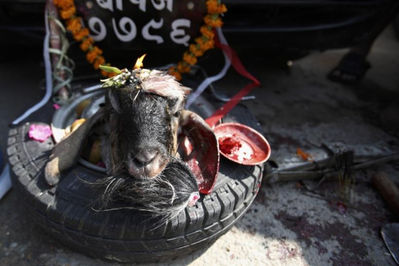 The head of a goat is placed in front of a car as an offering after being sacrificed during the Dasain festival in Kathmandu