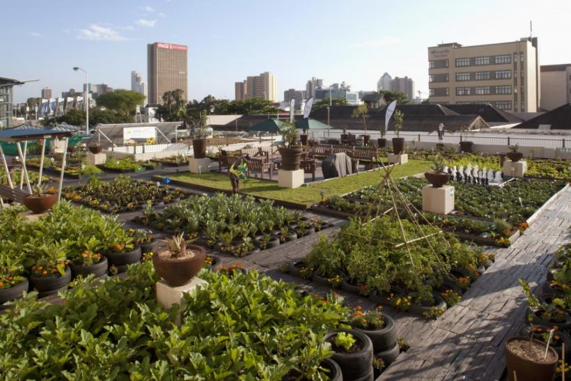 The green revolution urban gardens transform traditional for Rooftop gardening