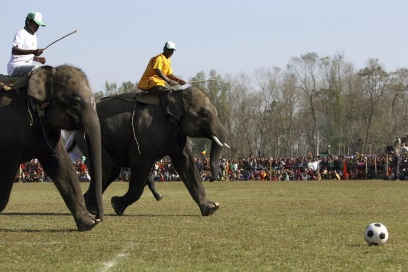 Elephants Play Soccer