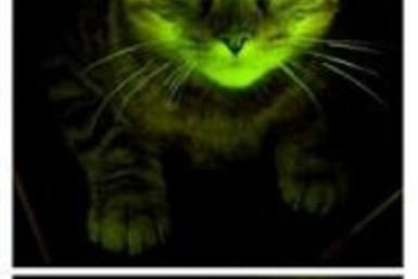 Green glowing cats