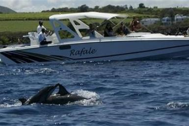 Tourists watch bottlenose dolphins in Tamarin Bay