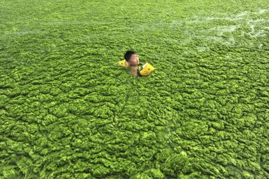 Boy swimming in algae