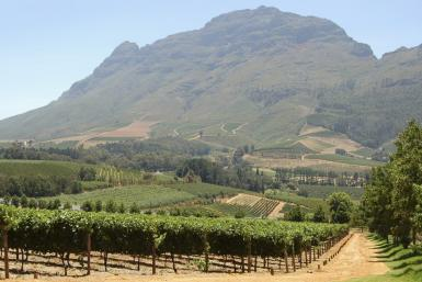 Delhaire Winery in South Africa