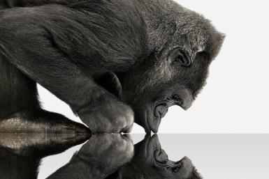 At CES 2012, Corning will introduce the next-generation of its damage-resistant specialty glass for TVs, PCs, smartphones and tablets called Gorilla Glass 2. The new glass is said to be thinner than Gorilla Glass but maintain its predecessor's ultra-stren