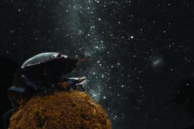 Dung Beetle And Milky Way