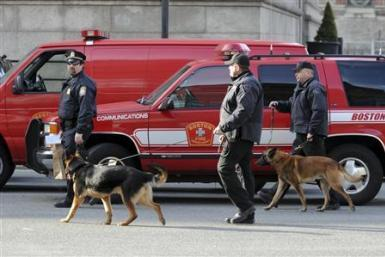 boston bomb dogs