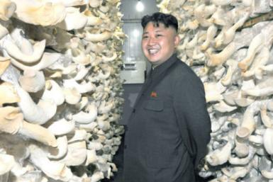 North Korean mushroom farm