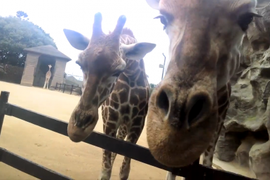 google-glass-zoo-2