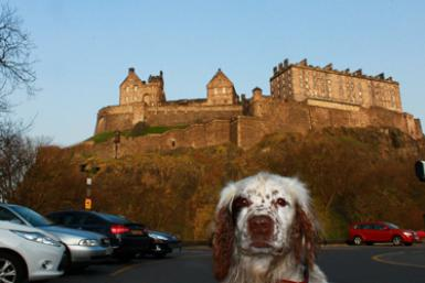 Touring Edinburgh By Dog: One Scotsman Finds His Way Home With The Help Of A Four-Legged Friend