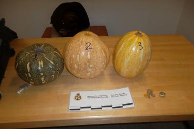 cocaine pumpkins