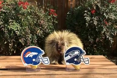 Teddy Bear the Porcupine