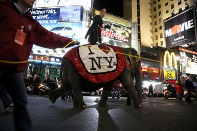 RinglingBros_Elephants In NY