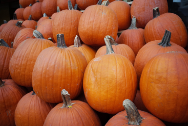 Celebrate National Pumpkin Day 2016 with a few fun takes on pumpkin drinks and treats.