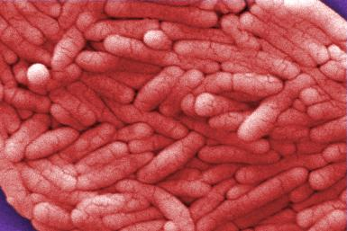 Salmonella Bacteria Close Up