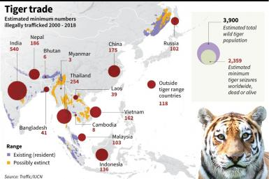 Graphic on tigers seized from illegal trafficking 2000 - 2018