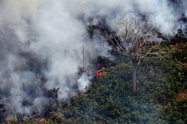 A piece of land burns in the Amazon rainforest, about 65 kilometres from Porto Velho in northern Brazil's Rondonia state, on August 23, 2019