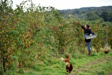 "Organic farm co-manager Ellie Woodcock of Brambletye Fruit in East Sussex fears Brexit will have ""quite a negative impact"", opening the door to less stringent checks on food"