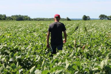 While US farmers like this one, pictured in a soybean field in the Midwestern state of Illinois, stand to gain from a tentative trade deal with China, many are waiting for more details