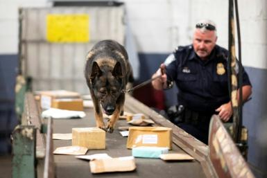 A US customs officer and sniffer dog searches for fentanyl that could be hidden in packages arriving at the John F. Kennedy Airport postal center on June 24, 2019