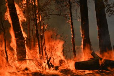 Devastating bushfires have razed more than a million hectares along Australia's seaboard
