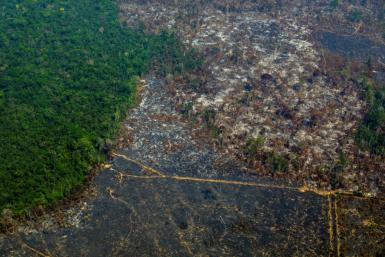 Deforestation in Brazil's Amazon, shown in this photo taken in Para state in August 2019, has risen sharply this year