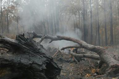 Rain falls across parts of bushfire-ravaged eastern Australia and more wet weather was forecast, giving some relief following months of catastrophic blazes fuelled by climate change.