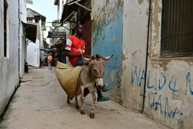 Kenya has decided to ban the slaughter of donkeys for use in Chinese medicine