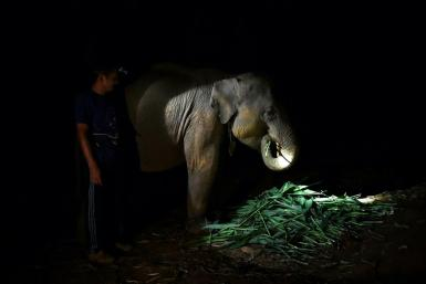 A mahout feeds an elephant at night