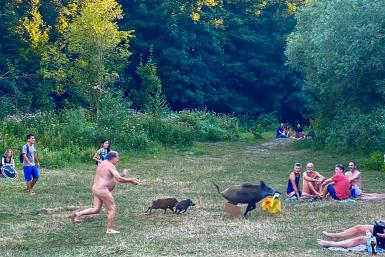 Pictures of the sunbather chasing the thieving mama boar went around the world