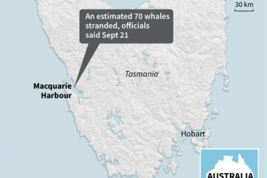 Map showing Macquarie Harbour on the Australian island of Tasmania, where an estimated 70 whales have become stranded