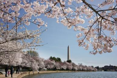 The Tidal Basin, where 'Argentine Firecracker' Fanne Foxe took a plunge in October 1974