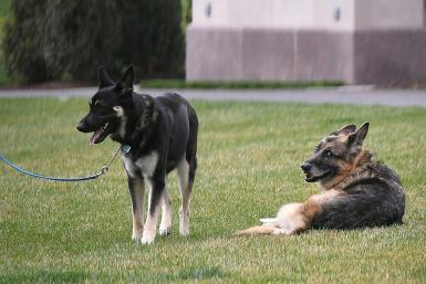 Major, on the left, needs to go back to school, though Champ, on the right, stays at the White House
