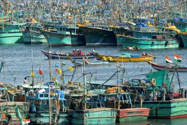 A third of commercial fish stocks were fished at biologically unsustainable levels in 2017