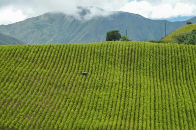 View of coca fields in Colombia in May 2021